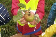 Apfelprojekt