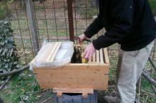 Neues aus dem Bienenstock der Kita Grashüpfer bei Karlsruhe
