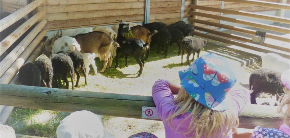 Die nanos!- Kinder besuchen den Zoo